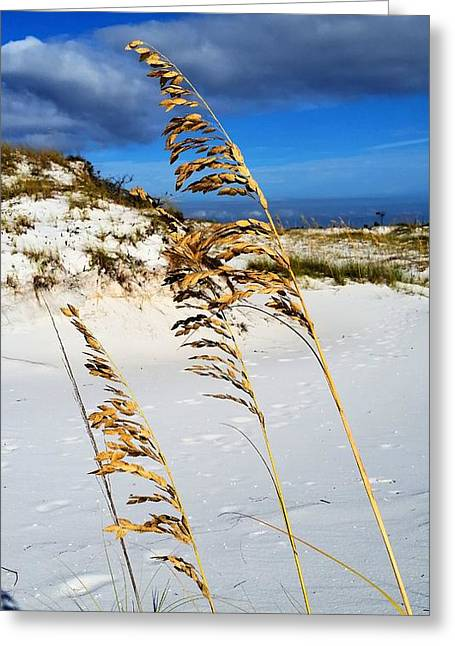 Florida Panhandle Greeting Cards - Blue skies on Pensacola Beach Greeting Card by JC Findley
