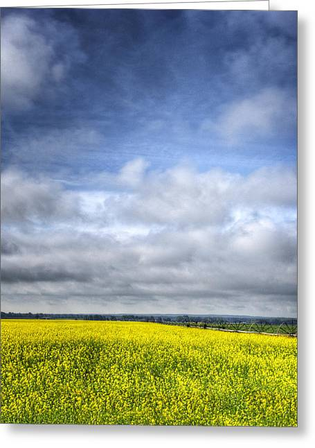 North Fork Greeting Cards - Blue Sky and Yellow Flowers Greeting Card by Vicki Jauron