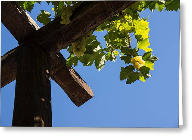 Lintel Greeting Cards - Blue Sky Grape Harvest - Thinking of Fine Wine Greeting Card by Georgia Mizuleva