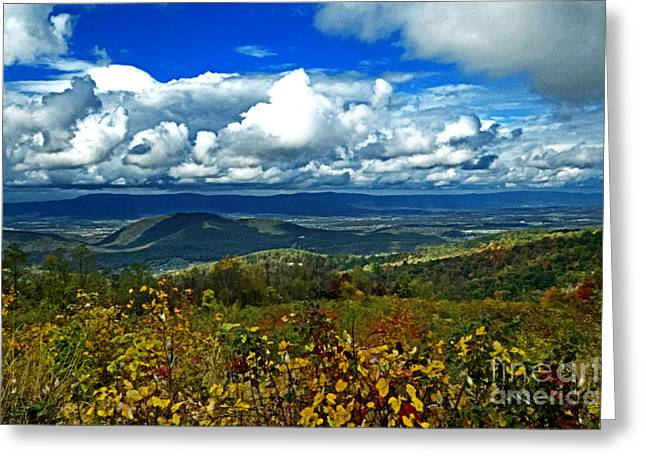 Nature Greeting Cards - Blue Sky In Autumn Greeting Card by Dawn Gari