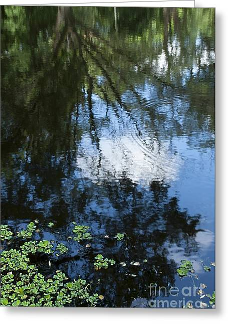 Tree Leaf On Water Greeting Cards - Blue Sky reflection on water selective focus Greeting Card by Rudra Narayan  Mitra
