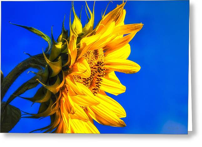 Meditate Greeting Cards - Blue Sky Sunshine Sunflower Greeting Card by Bob Orsillo