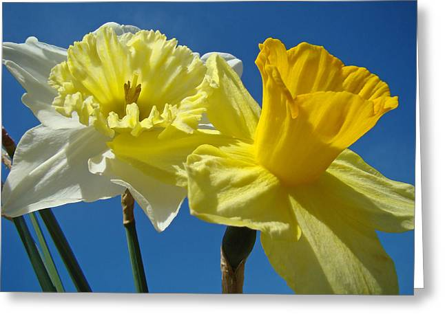 Twilight Framed Prints Greeting Cards - Blue Sky Twilight Spring Daffodils Flowers Greeting Card by Baslee Troutman