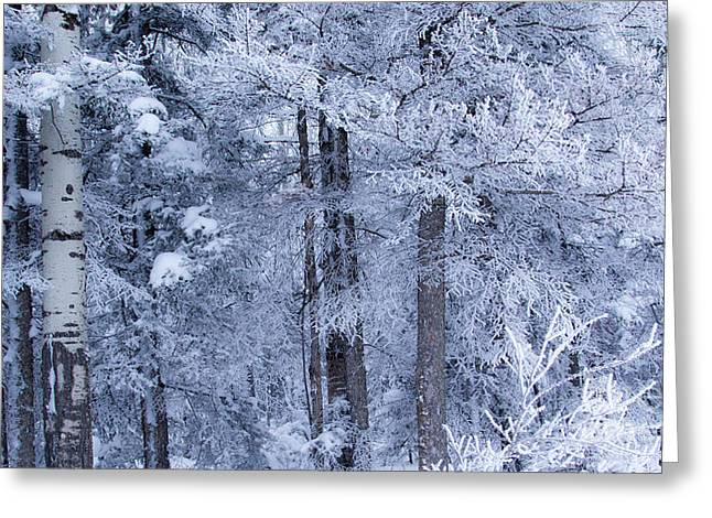 Snow Scene Landscape Greeting Cards - Blue Snowy Day Greeting Card by Alanna DPhoto