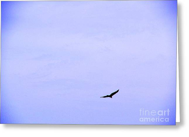 Blue Solo Flight Greeting Card by Tina M Wenger