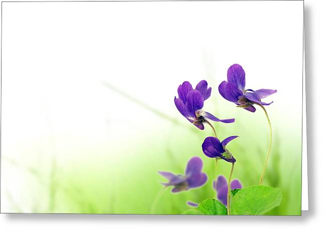 Blue Spring Flowers Greeting Card by Boon Mee