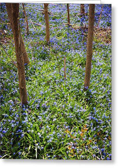 Carpet Photographs Greeting Cards - Blue spring flowers in forest Greeting Card by Elena Elisseeva