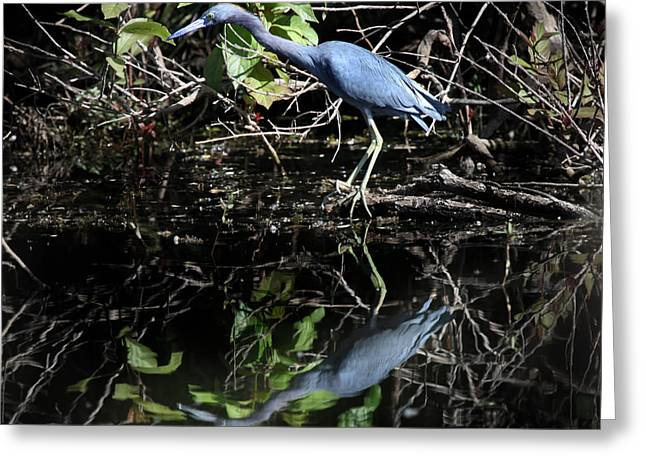 Water Fowl Greeting Cards - Blue Stalker Greeting Card by Joseph G Holland