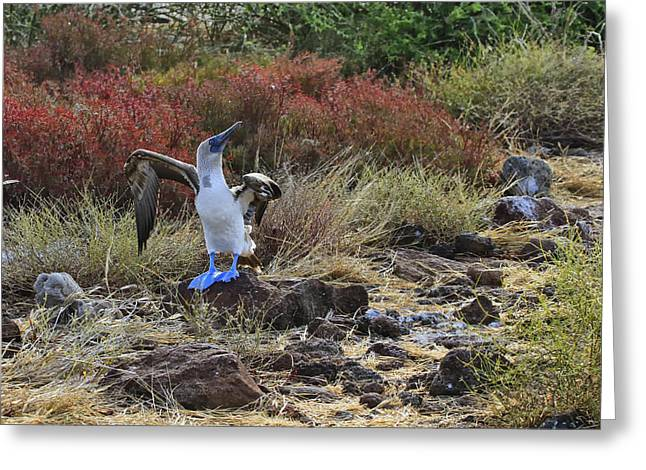 Seabirds Greeting Cards - Blue Suede Shoes Greeting Card by Gary Hall