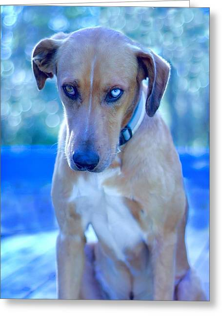 Catahoula Greeting Cards - Blue Sulking Greeting Card by Delilah Downs