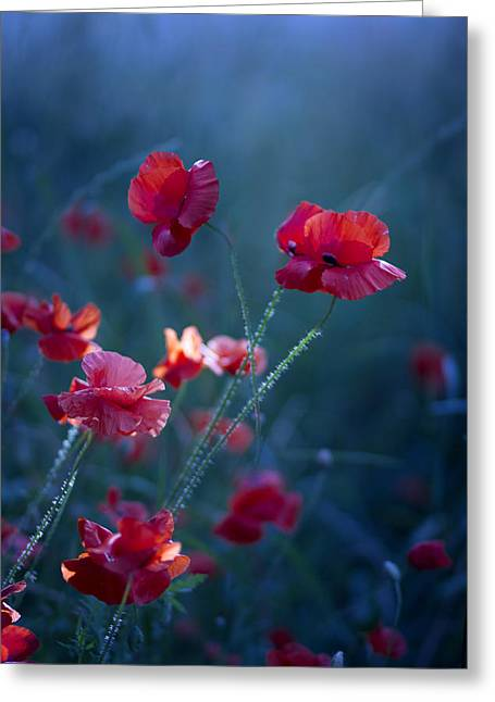 Artwork Flowers Greeting Cards - Blue Summer III Greeting Card by Magda  Bognar