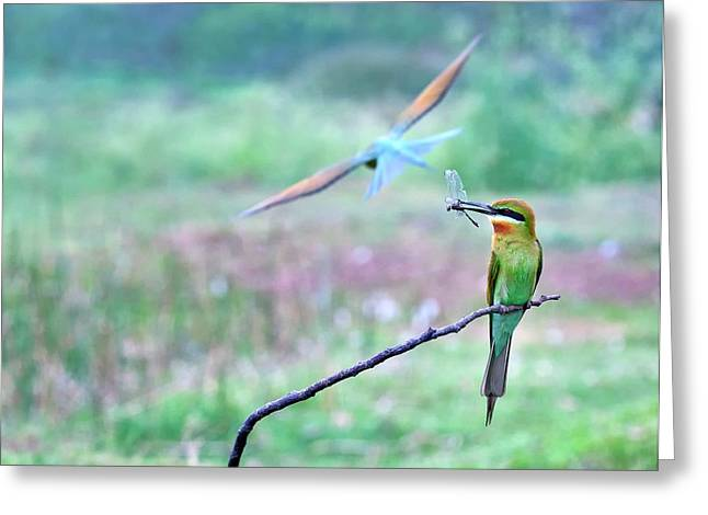 Blue-tailed Bee-eater Greeting Card by K Jayaram