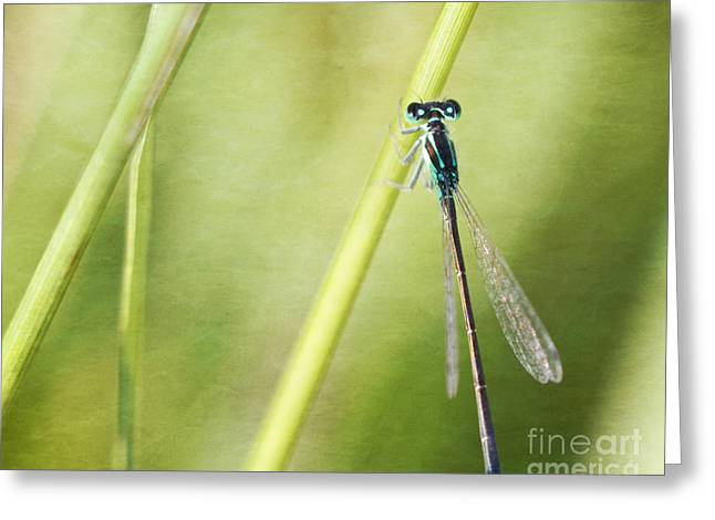 Blue Tail Greeting Cards - Blue-tailed damselfly Greeting Card by Jarrod Erbe