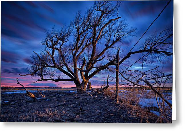 Plain Greeting Cards - Blue Timber Greeting Card by Thomas Zimmerman