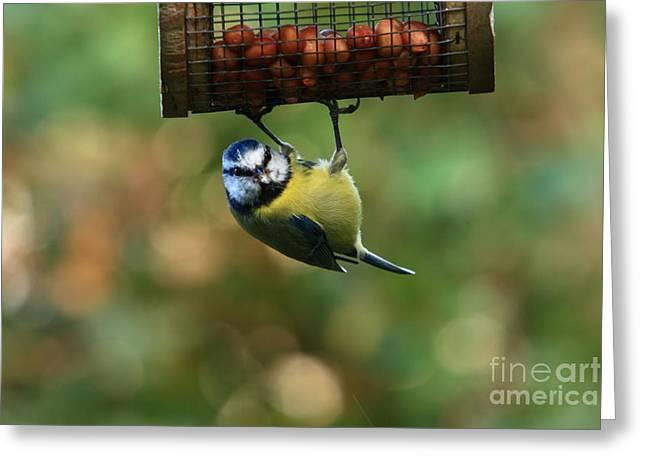 Aidan Moran Photography Greeting Cards - Blue Tit Greeting Card by Aidan Moran