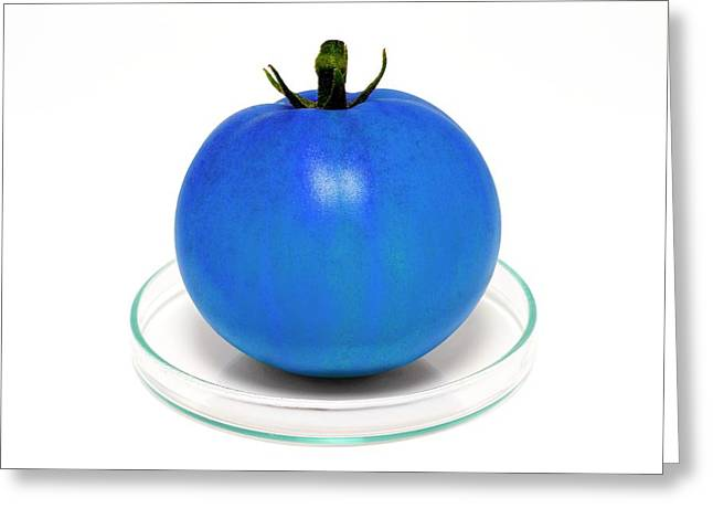 Blue Tomato On Petri Dish Greeting Card by Victor De Schwanberg