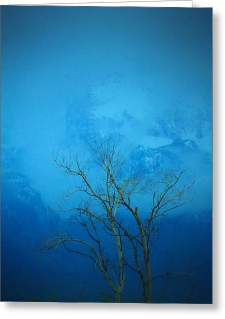 Old Tree Photographs Greeting Cards - Blue Tree Greeting Card by Dan Sproul