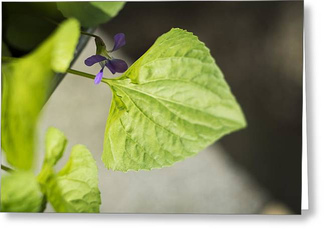 Floriography Greeting Cards - Blue Violet with Triangles Greeting Card by Rebecca Sherman