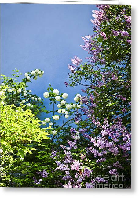 Lilac Flower Greeting Cards - Blue wall with flowers Greeting Card by Elena Elisseeva