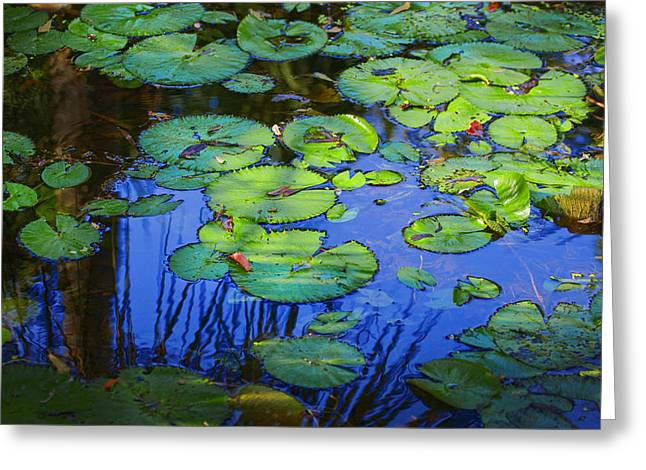 Historic Home Greeting Cards - Blue Water Green Lily Pads Greeting Card by Rich Franco