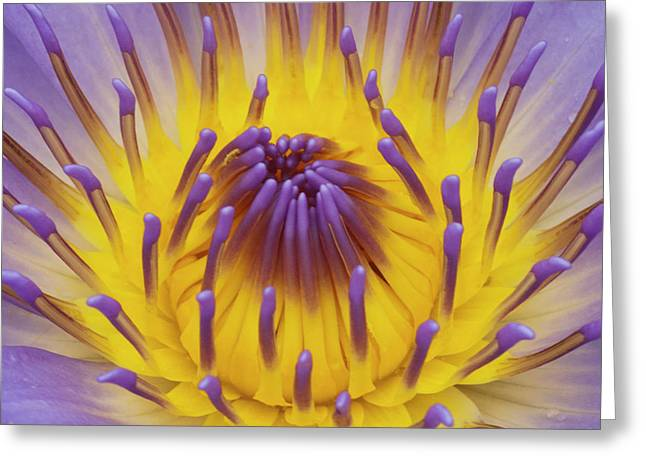Water Lilly Greeting Cards - Blue Water Lily Greeting Card by Heiko Koehrer-Wagner