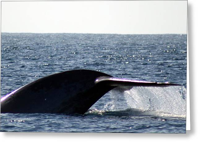Valerie Broesch Greeting Cards - Blue Whale Flukes Greeting Card by Valerie Broesch