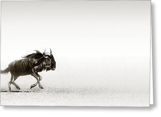 Dusty Blue Greeting Cards - Blue wildebeest in desert Greeting Card by Johan Swanepoel