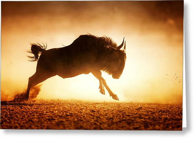 Backlit Greeting Cards - Blue wildebeest running in dust Greeting Card by Johan Swanepoel