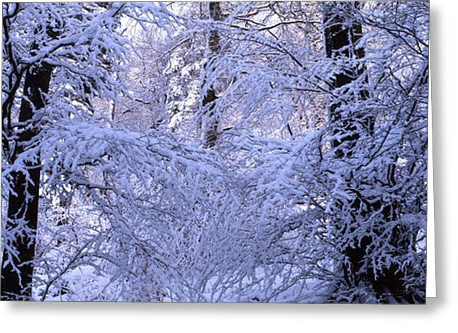 Snowy Evening Greeting Cards - Blue winter forest Greeting Card by Intensivelight