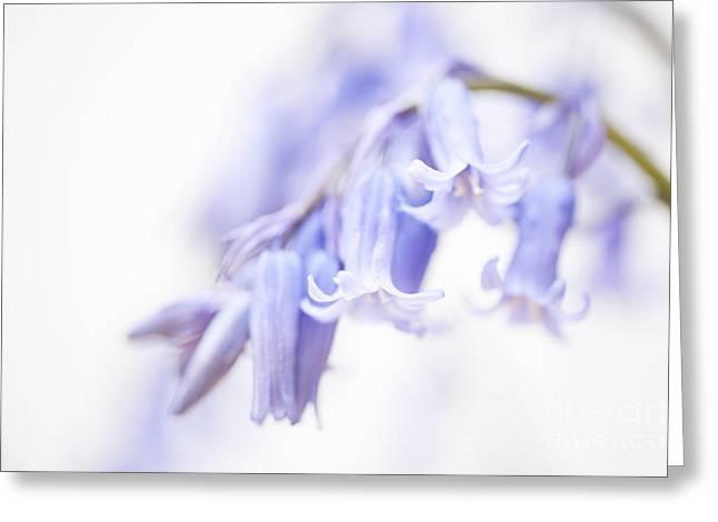 Close Focus Floral Greeting Cards - Bluebell Abstract III Greeting Card by Anne Gilbert