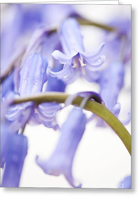 Scripta Greeting Cards - Bluebell Abstract IV Greeting Card by Anne Gilbert