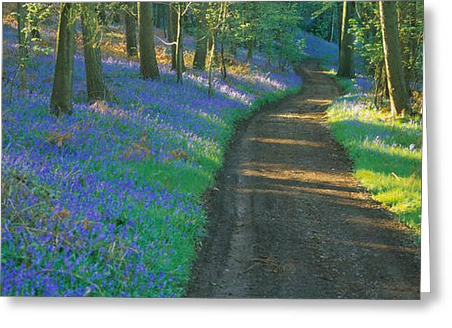 Dirt Image Greeting Cards - Bluebell Flowers Along A Dirt Road Greeting Card by Panoramic Images
