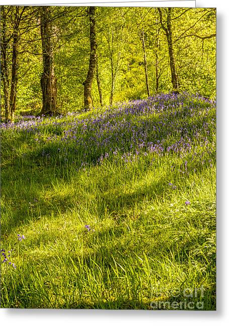 Dappled Light Greeting Cards - Bluebell Flowers Greeting Card by Amanda And Christopher Elwell