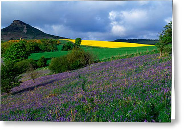 Topping Greeting Cards - Bluebell Flowers In A Field, Cleveland Greeting Card by Panoramic Images