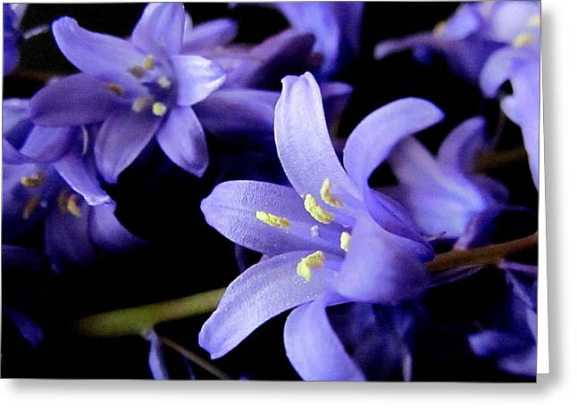 Joyce Woodhouse Greeting Cards - Bluebell Flowers Greeting Card by Joyce Woodhouse