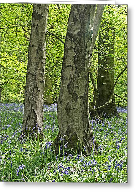 Walden Greeting Cards - Bluebell Wood 2 Greeting Card by Gill Billington