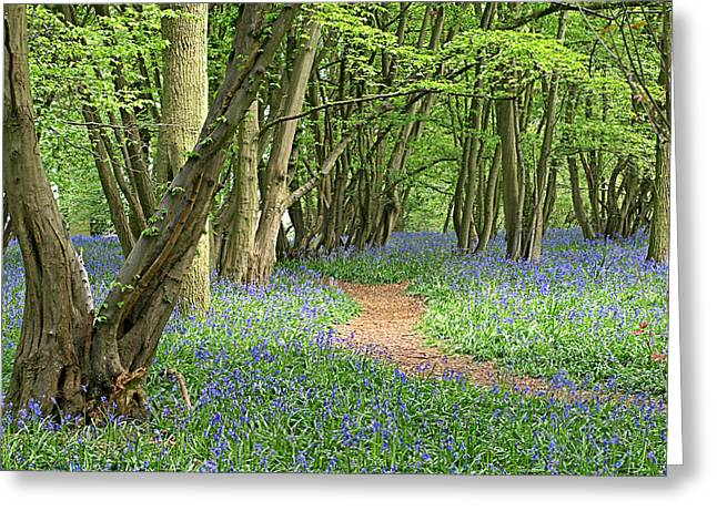 Walden Greeting Cards - Bluebell Wood 3 Greeting Card by Gill Billington