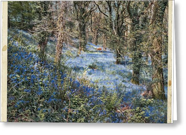 Forest Greeting Cards - Bluebell Forest in Spring Greeting Card by Curtis Radclyffe