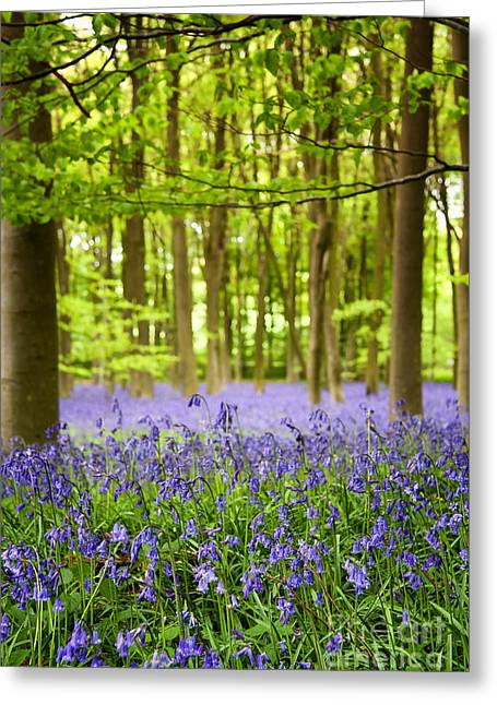 Bluebell Wood Greeting Card by Jane Rix