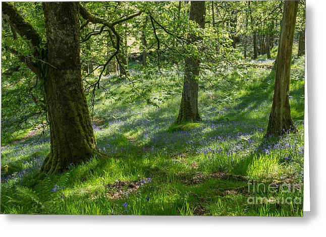 John Collier Greeting Cards - Bluebell Wood Greeting Card by John Collier
