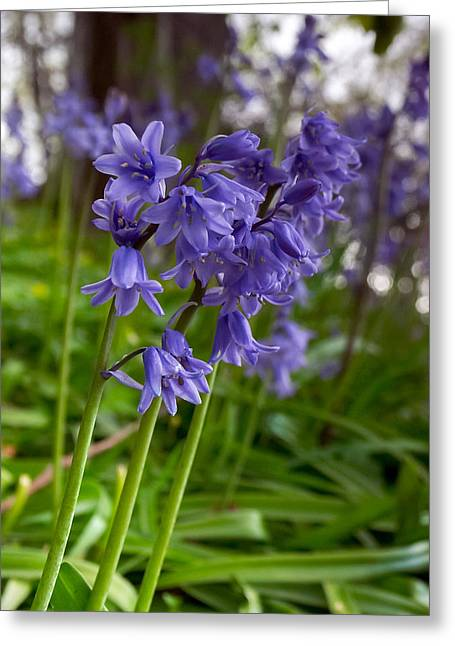 Endymion Greeting Cards - Bluebell wood Greeting Card by Paul Cowan