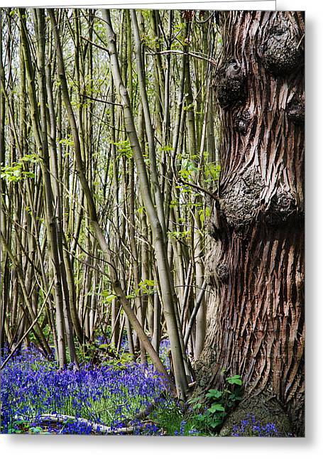 Tress Greeting Cards - Bluebell Woodland Greeting Card by Mark Rogan