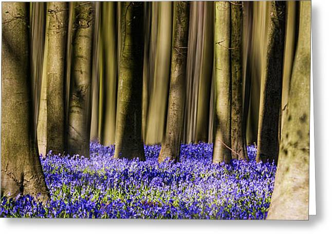 Bluebells Greeting Cards - Bluebell woodland Panoramic Greeting Card by Ian Hufton