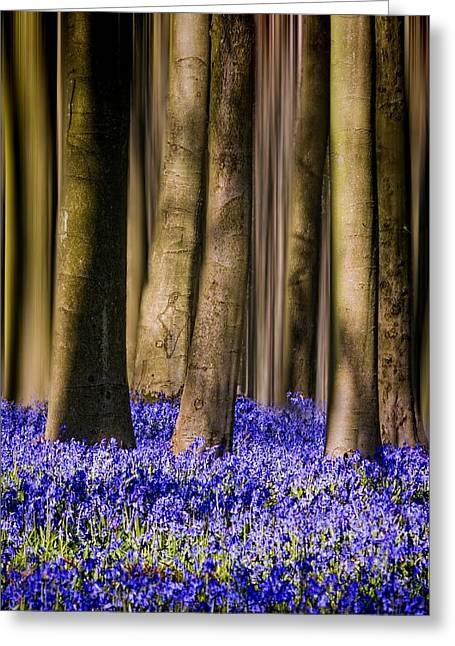 Woodland Scenes Greeting Cards - Bluebell woodland portrait Greeting Card by Ian Hufton