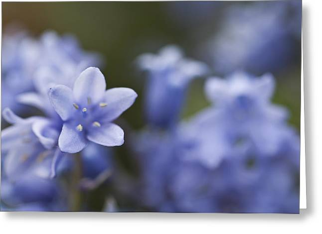 Bluebells 3 Greeting Card by Steve Purnell