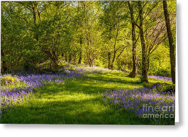 Dappled Light Greeting Cards - Bluebells Greeting Card by Amanda And Christopher Elwell