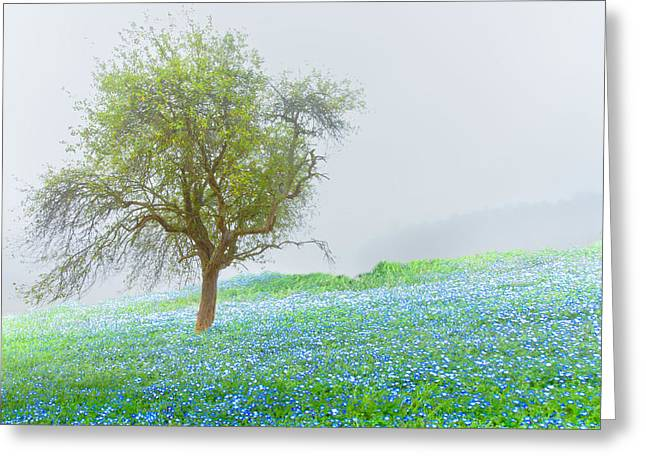 Bluebells Greeting Card by Debra and Dave Vanderlaan