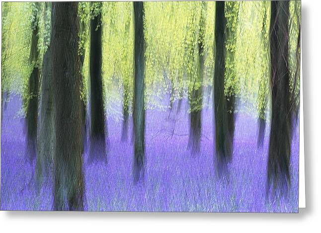 Endymion Greeting Cards - Bluebells in a beech wood, artwork Greeting Card by Science Photo Library