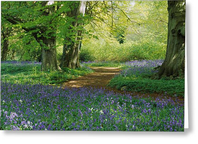 Spring Scenes Greeting Cards - Bluebells In A Forest, Thorp Perrow Greeting Card by Panoramic Images