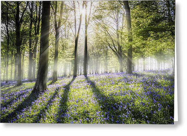 Ashes Greeting Cards - Bluebells in the mist Greeting Card by Ian Hufton